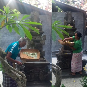 Wayan's grandpa-in-law and her mother making their morning rounds of daily offerings to the gods and Bali spirits.